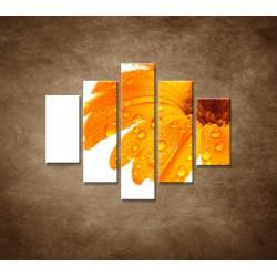 Obrazy na stenu - Oranžová gerbera - 5dielny 100x80cm