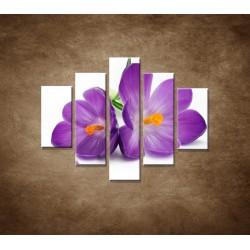 Obrazy na stenu - Krokus - 5dielny 100x80cm