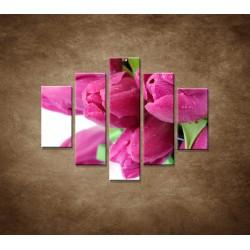 Obrazy na stenu - Tulipány  - 5dielny 100x80cm