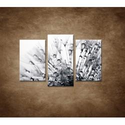 Obrazy na stenu - Makro - Rosa na púpave - 3dielny 75x50cm