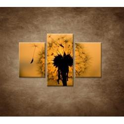 Obrazy na stenu - Makro - Púpava - 3dielny 90x60cm