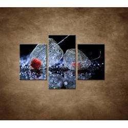 Obrazy na stenu - Makro - Machovka - 3dielny 90x60cm