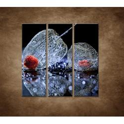 Obrazy na stenu - Makro - Machovka - 3dielny 90x90cm