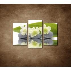 Obrazy na stenu - Biele kvety na kameňoch - 3dielny 75x50cm