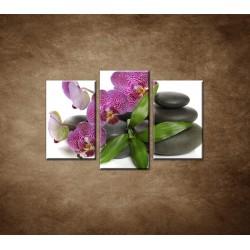 Obrazy na stenu - Orchidea na kameňoch - 3dielny 75x50cm
