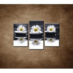 Obrazy na stenu - Tri sedmokrásky - 3dielny 75x50cm