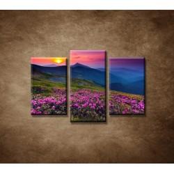 Obrazy na stenu - Západ slnka 2 - 3dielny 75x50cm