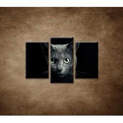 Obrazy na stenu - Pohľad mačky - 3dielny 75x50cm
