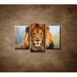 Obrazy na stenu - Leví kráľ - 3dielny 75x50cm