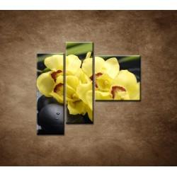 Obrazy na stenu - Žltá orchidea s kameňmi -  3dielny 110x90cm