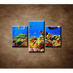Obrazy na stenu - Podmorský svet - 3dielny 90x60cm