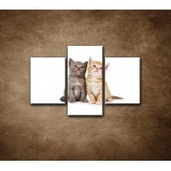 Obrazy na stenu - Dve mačiatka - 3dielny 90x60cm