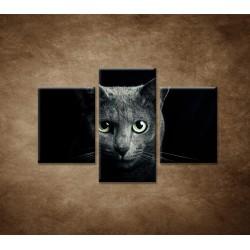 Obrazy na stenu - Pohľad mačky - 3dielny 90x60cm