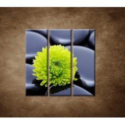 Obrazy na stenu - Žlto-zelený kvet - 3dielny 90x90cm