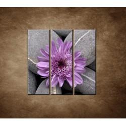 Obrazy na stenu - Sivé kamene s kvetom - 3dielny 90x90cm