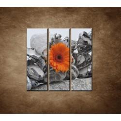 Obrazy na stenu - Oranžová gerbera a kamene - 3dielny 90x90cm