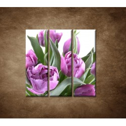 Obrazy na stenu - Nežné tulipány - 3dielny 90x90cm