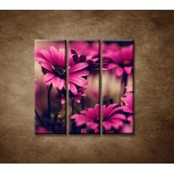 Obrazy na stenu - Ružové gerbery - 3dielny 90x90cm