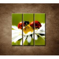 Obrazy na stenu - Lienky na kvete - 3dielny 90x90cm