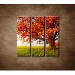 Obrazy na stenu - Jesenný dub - 3dielny 90x90cm