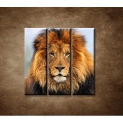 Obrazy na stenu - Leví kráľ - 3dielny 90x90cm
