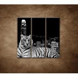 Obrazy na stenu - Mestský tiger - 3dielny 90x90cm