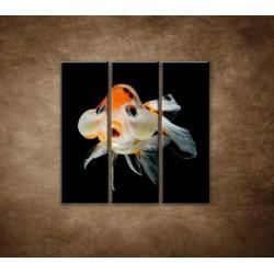 Obrazy na stenu - Rybka - 3dielny 90x90cm