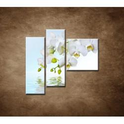 Obrazy na stenu - Biela orchidea nad hladinou - 3dielny 110x90cm