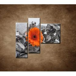 Obrazy na stenu - Oranžová gerbera a kamene - 3dielny 110x90cm