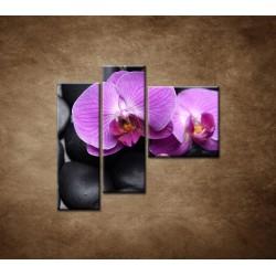 Obrazy na stenu - Ružové orchidey - 3dielny 110x90cm