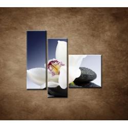 Obrazy na stenu - Biela orchidea na čiernom kameni - 3dielny 110x90cm