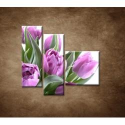 Obrazy na stenu - Nežné tulipány - 3dielny 110x90cm