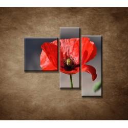 Obrazy na stenu - Vlčí mak - 3dielny 110x90cm