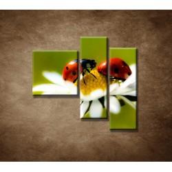 Obrazy na stenu - Lienky na kvete - 3dielny 110x90cm