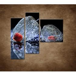 Obrazy na stenu - Makro - Machovka - 3dielny 110x90cm