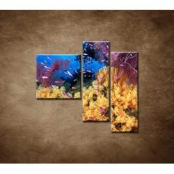 Obrazy na stenu - Korálový útes - 3dielny 110x90cm
