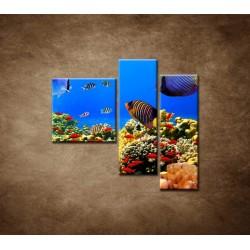 Obrazy na stenu - Podmorský svet - 3dielny 110x90cm