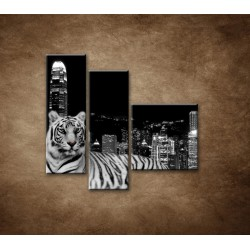 Obrazy na stenu - Mestský tiger - 3dielny 110x90cm