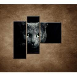 Obrazy na stenu - Pohľad mačky - 3dielny 110x90cm
