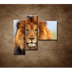 Obrazy na stenu - Leví kráľ - 3dielny 110x90cm
