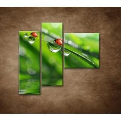 Obrazy na stenu - Lienky - 3dielny 110x90cm