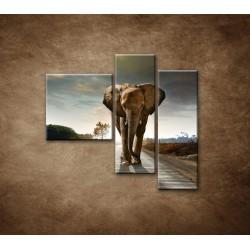 Obrazy na stenu - Slon - 3dielny 110x90cm