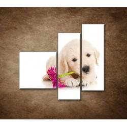 Obrazy na stenu - Psík s kvetom - 3dielny 110x90cm