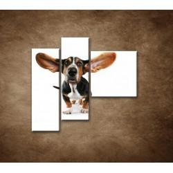 Obrazy na stenu - Ušatý pes - 3dielny 110x90cm