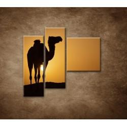 Obrazy na stenu - Ťava na Sahare - 3dielny 110x90cm