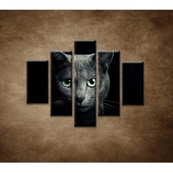 Obrazy na stenu - Pohľad mačky - 5dielny 100x80cm