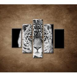 Obrazy na stenu - Čiernobiely jaguár - 5dielny 100x80cm
