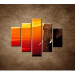 Obrazy na stenu - Afrika - 5dielny 100x80cm