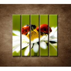 Obrazy na stenu - Lienky na kvete - 5dielny 100x100cm
