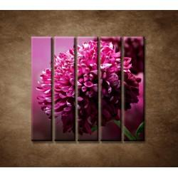 Obrazy na stenu - Kvetinové pozadie - 5dielny 100x100cm